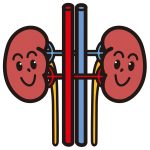 【看護師国家試験】解剖生理学:泌尿器まとめ